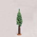 Hochwald-Spanbäume (20 cm)